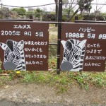 itozu_150118 391 (3)