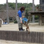 uminaka_dobutsu_150228 977