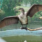 鳥の海・神の峰・黒猩々の森 日立市かみね動物園・その2