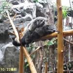 noichi_141022 470r (2)