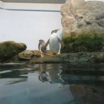 noichi_150314 1305 (3)