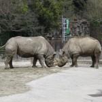 動物たちのミニマム 愛媛県立とべ動物園・その2