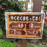 kobedobutsu_150628 017