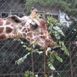 動物たちの宝箱 野生・飼育・動物園 池田動物園・その2