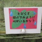 ishikawa_150830 (305)