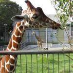 野生を飼育展示する 浜松市動物園・その1