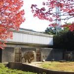 hamamatsushi_151105_06 141