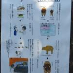 hamamatsushi_151105_06 531p
