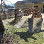 ミニマムということ 福山市立動物園・その1