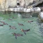 みんなちがって、そこがいい。 福山市立動物園・その2